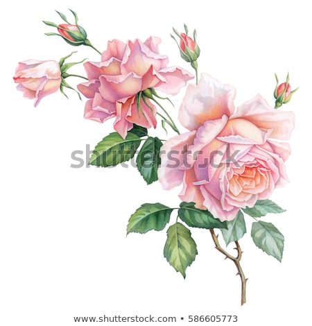 Retro roses vintage Stock photo © ElaK