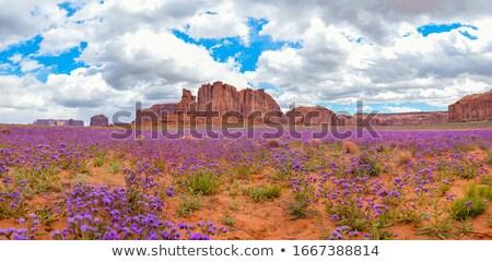 パノラマ 赤 山 アリゾナ州 パノラマ ショット ストックフォト © pixelsnap