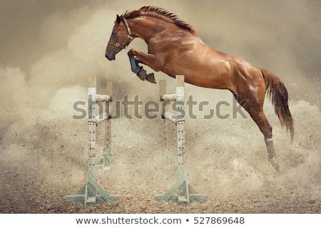 Jumping horse  Stock photo © IstONE_hun