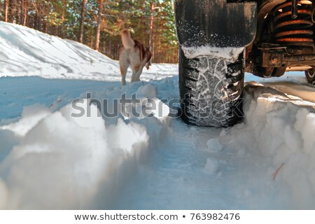 tire and animal tracks on snow in icy conditions stock photo © morrbyte