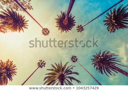 palm trees on the boulevard Stock photo © compuinfoto