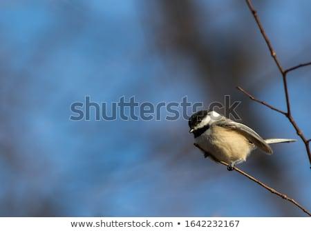 птица семян живая природа Сток-фото © bigjohn36