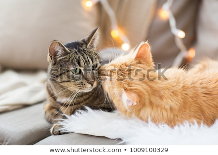 Two cats in love stock photo © juliakuz