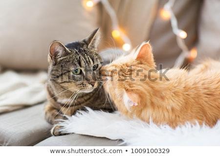 два кошек любви сердце дизайна пару Сток-фото © juliakuz
