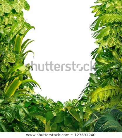 Tropical Plants Blank Frame Stock photo © Lightsource