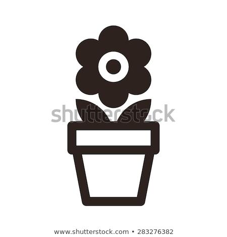 Isolado branco flor natureza Foto stock © cteconsulting