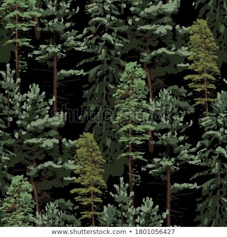 Finnish landscape Stock photo © Stocksnapper