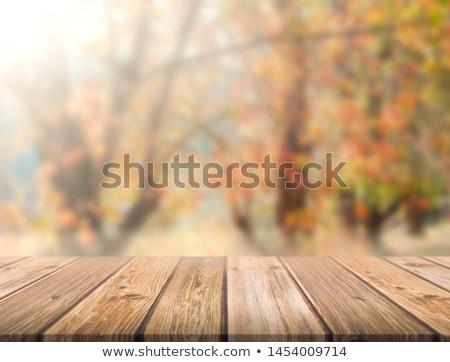 pluie · gouttes · herbe · feuille · saison · d'automne · eau - photo stock © tolokonov