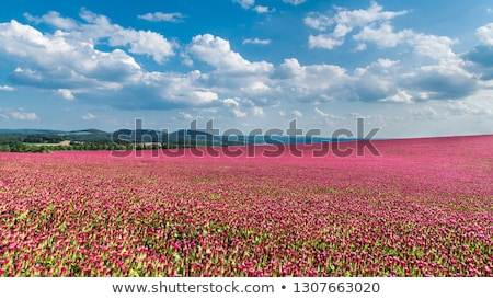 Сток-фото: Landscape With Flowers And Sky
