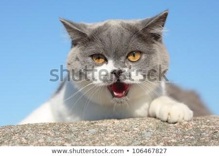 macska · kép · piros · baba · kék · macskák - stock fotó © silkenphotography