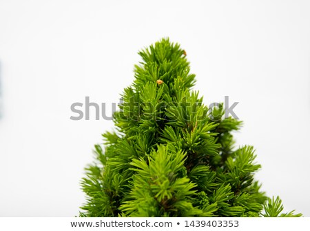 Jovem verde isolado branco jardim limpar Foto stock © Zhukow