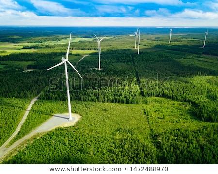 Wind Turbine in Pine Forest Stock photo © tainasohlman