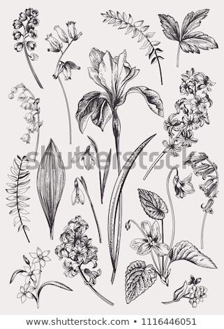 Элементы набор декоративный Пасху дизайна лист Сток-фото © Ansy