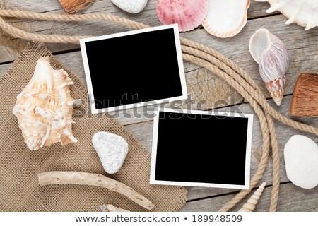 blank photo frame with seashell and ship rope stock photo © karandaev