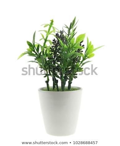 artificielle · orchidée · blanche · fleur · texture · nature - photo stock © cherezoff