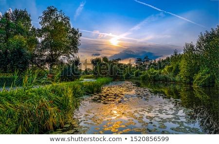 Szürkület erdő folyó fák napfény kicsi Stock fotó © compuinfoto