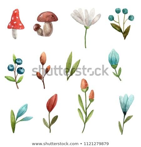 手描き 実例 水彩画 セット 図面 ストックフォト © artibelka
