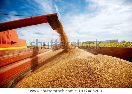 Close up Photo of Combine Harvester Harvesting Wheat Stock photo © maxpro