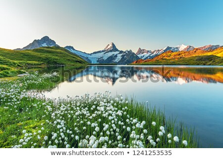 Landscape with mountain flowers at dawn Stock photo © Kotenko
