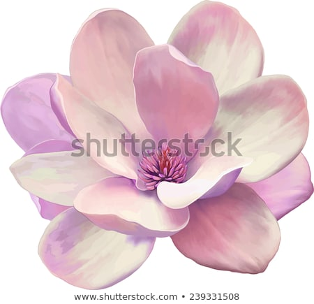 blossom Magnolia flower in nature stock photo © Ava