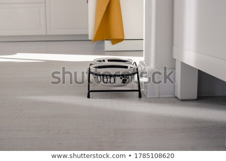 noir · chien · équilibrage · os - photo stock © iofoto