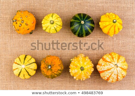 Two neat rows of different ornamental gourds Stock photo © ozgur