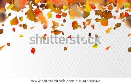 ősz ősz levelek bemozdult színes absztrakt Stock fotó © latent