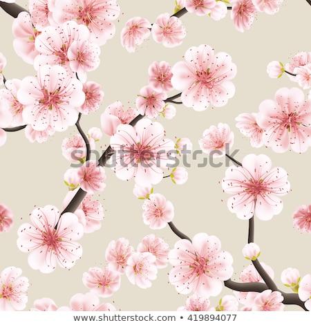 cseresznyevirágzás · ág · fehér · vektor · sakura · tavasz - stock fotó © beholdereye