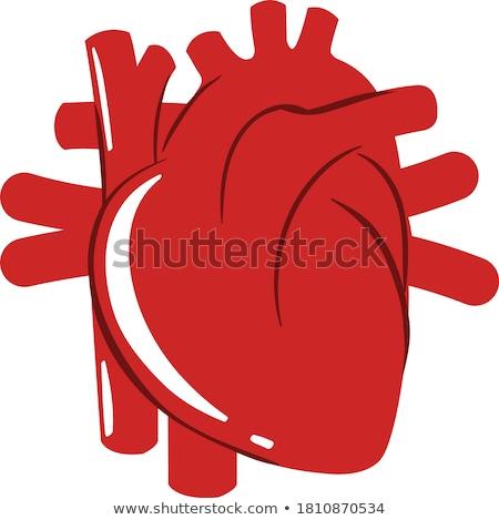 Emberi szív rajz stílus illusztráció izolált Stock fotó © BoogieMan
