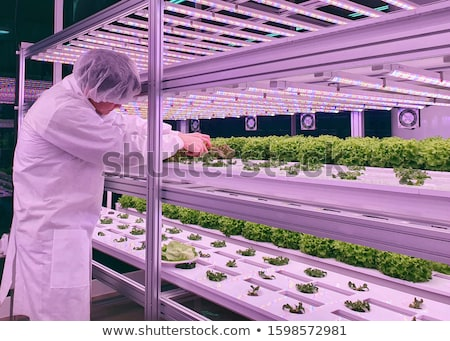 Vertical image of model in greenhouse Stock photo © deandrobot