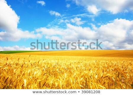 verde · frescos · hierba · cielo · azul · panorama · listo - foto stock © fogen