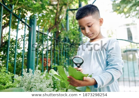 learn vietnamese through magnifying glass stock photo © tashatuvango