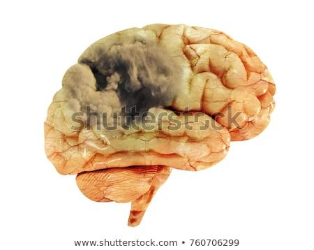 agy · vér · folyik · vénák · emberi · keringési - stock fotó © tashatuvango