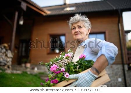 kıdemli · kadın · bahçıvanlık · pot · çiçekler - stok fotoğraf © wavebreak_media