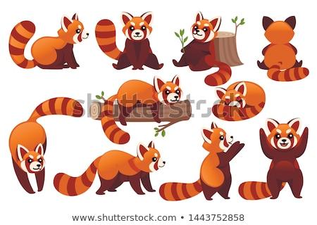 Cartoon rosso panda sorridere illustrazione piedi Foto d'archivio © cthoman