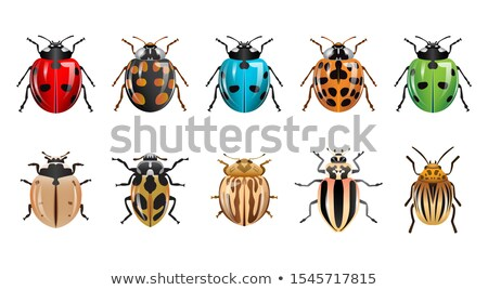 Set of bug and insect Stock photo © bluering