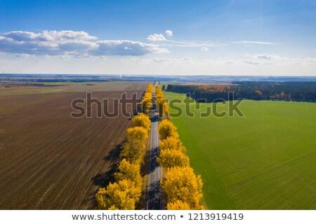 Boom weg najaar kleuren rustiek Stockfoto © lovleah