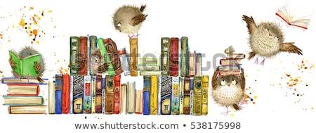 Animais livros prateleira de livros ilustração gato fundo Foto stock © colematt