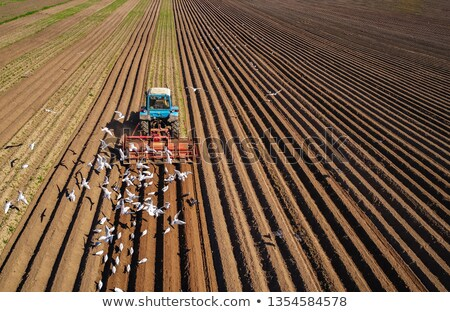 Mezőgazdasági munka traktor gazda gabona éhes Stock fotó © cookelma