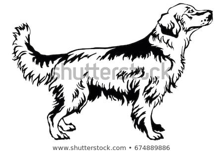 Dier schets golden retriever hond illustratie natuur Stockfoto © colematt