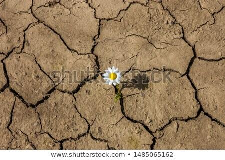 Pustyni kwiaty dzień skamieniałość górskich piasku Zdjęcia stock © craig