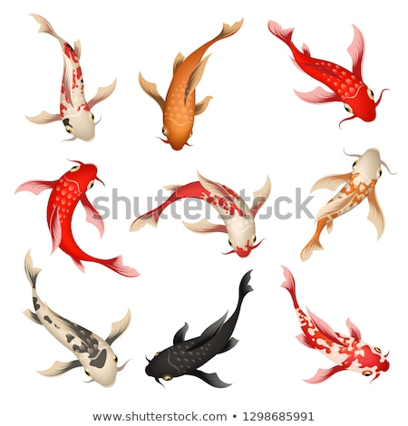 Oriental White Koi Fish With Orange Spots Vector Stock photo © pikepicture