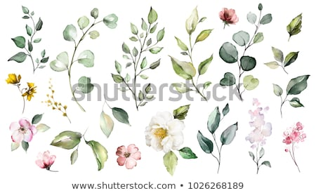 set of watercolor flowers and leaves stock photo © artspace
