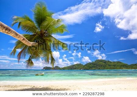 Ilha Seychelles silhueta palmeira praia céu Foto stock © AndreyPopov