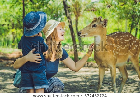 Mother and son feeding beautiful deer from hands in a tropical Zoo Stock photo © galitskaya
