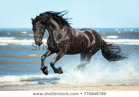 Horses in gallop Stock photo © Darkves