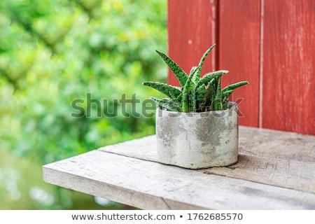 Aloe cura della pelle cosmetici prodotti turchese Foto d'archivio © marilyna