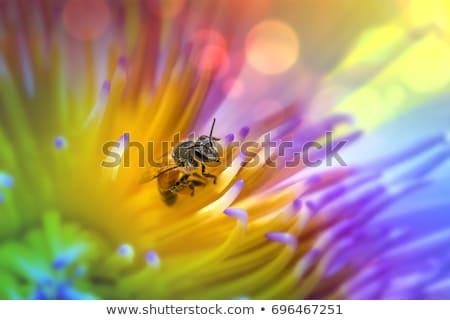 zonnebloem · bee · nectar · honing · productie · bloem - stockfoto © andreykr
