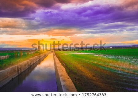 green grass rice field in valencia spain stock photo © lunamarina