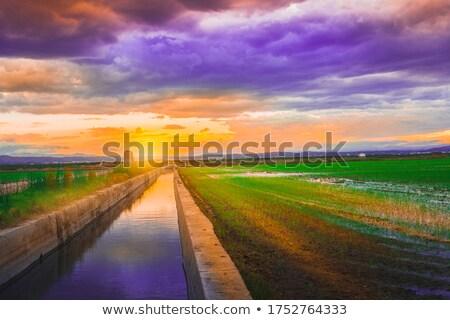 зеленая трава Валенсия Испания воды трава Сток-фото © lunamarina